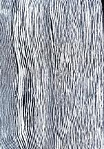 Judy Napangardi Watson Mina Mina Jukurpa (Mina Mina Dreaming) – Ngalyipi, 2011 acrylic on linen 152 x 107 cm 711/11